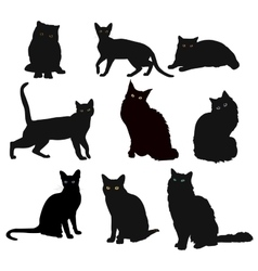 Breed cats silhouette in different poses vector image vector image