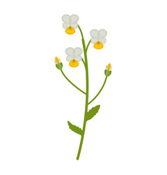 field violet flower flat icon wildflowers plant vector image
