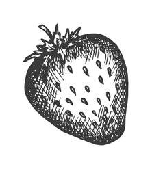 Strawberry hand drawn sketch fruit vector