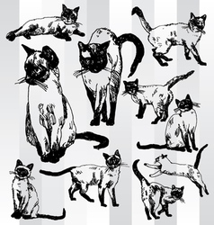 Some Cats Hand Drawn vector image vector image