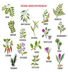 Best natural herbs for pain relief vector