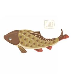 Carp vector