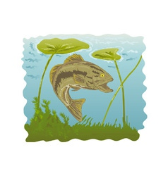Largemouth bass jumping vector