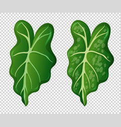 Two patterns on green leaves vector
