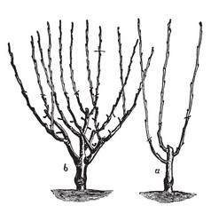 Dwarf tree pruning vintage vector
