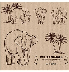 Elephants vector image
