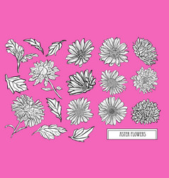 Hand drawn floral decorations vector