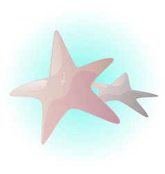 little starfish vector image