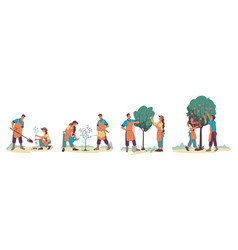 people planting apple tree and gathering harvest vector image