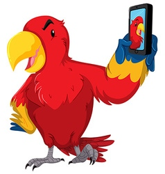 Red parrot taking selfie with phone vector image