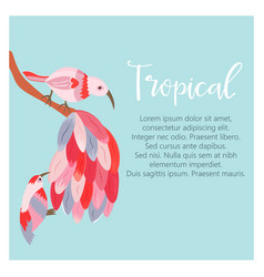 tropical background with exotic birds vector image