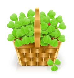 basket with clover vector image vector image