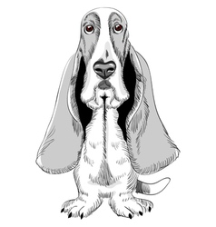 basset hound vector image vector image