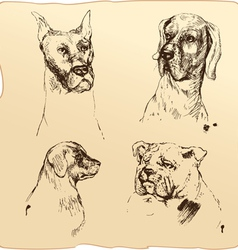 Set of Dogs heads - dalmatian bloodhound bulldog h vector image