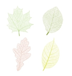 Leaf skeleton vector image