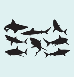 Shark wild animal silhouettes vector