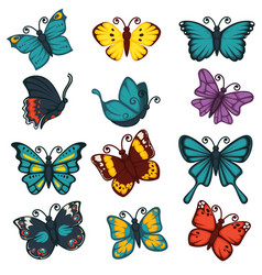 butterflies species types decoration design vector image