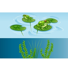 Frogs on water lily and underwater scene vector