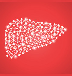 Human liver isolated on a red background vector