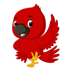 cardinal bird cartoon vector image