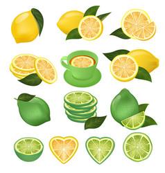 Lemon green lime and lemony sliced yellow vector