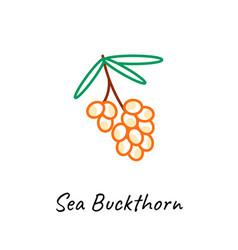 sea buckthorn berry icon vector image