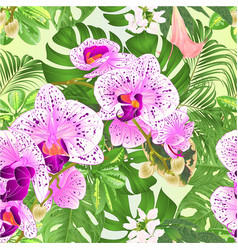 seamless texture tropical orchids phalaenopsis vector image