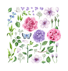 big set of flowers roses hydrangea apple tree vector image vector image