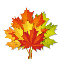 bouquet of autumn leaves vector image vector image