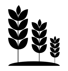 Wheat germ icon simple style vector image