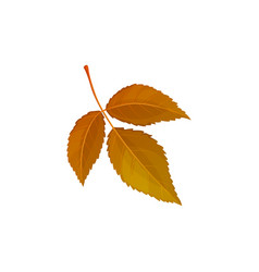 Autumn leaf tree foliage dry brown leaves vector