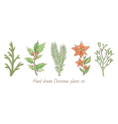 christmas plant branch set holly mistletoe vector image