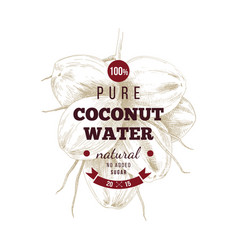 cococnut water label over hand drawn coconut bunch vector image