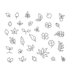 Different types of leaves set of various species vector