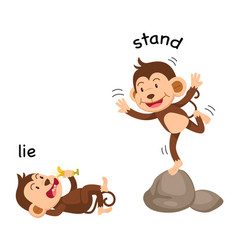 Opposite words lie and stand vector