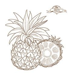 Outline hand drawn pineappleflat style thin line vector image