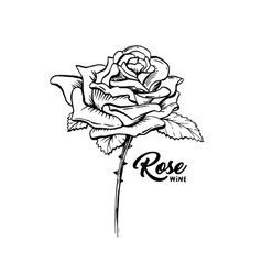 Rose flower hand drawn ink pen vector