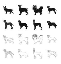 Dog breeds blackoutline icons in set collection vector