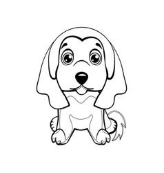 color sketch of a dog afghan hound breed lovely vector image