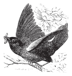 Eastern bluebird Sketch vector image vector image