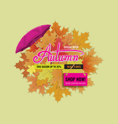 Autumn sale background layout with cute lettering vector