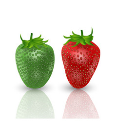 set of realistic sweet and fresh strawberries vector image