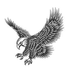 eagle engraving vector image