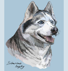 Colored hand drawing portrait of siberian husky vector