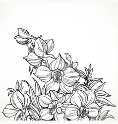 black and white graphic line drawing flowers vector image