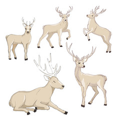 cute deer cartoon set wildlife character vector image