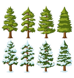 different shapes of pine trees vector image