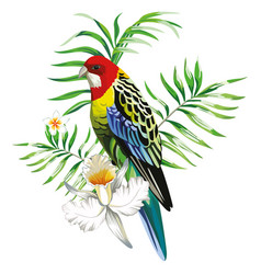Multicolor parrot with tropical plants and vector
