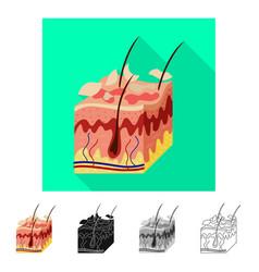 Skin and epidermis symbol vector