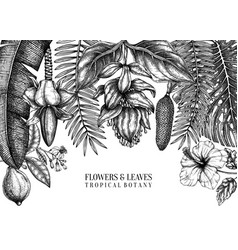 tropical plants frame design exotic flowers vector image